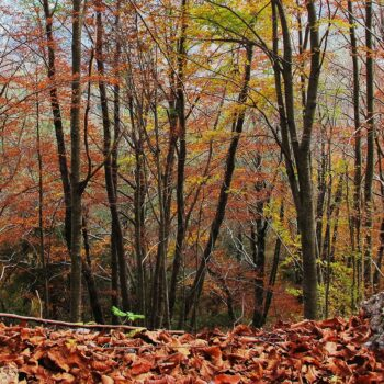 F024 - Cromaure d'autunno